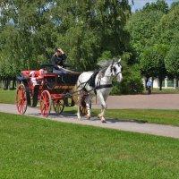 Конные прогулки по кусково :: Константин Анисимов