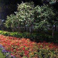 Александровский сад ночью... :: Елена
