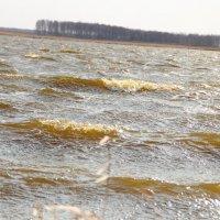 Озеро Рябовское, Алтайский край - сильный ветер, волны :: Светлана Рябова-Шатунова