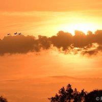 Летящие к солнцу :: Сергей