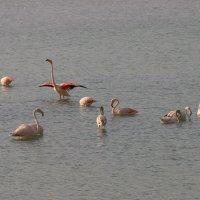 Розовый фламинго... :: Mila .