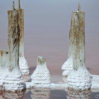 Розовое озеро Сасык -Сиваш :: Наталья Каракуца