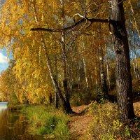Осенний берег :: Нэля Лысенко