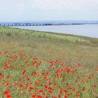 Степь- Море- Мост :: irina Schwarzer
