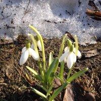 Немного о весне . :: Татьяна