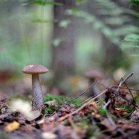 в осеннем лесу... #3 :: Андрей Вестмит