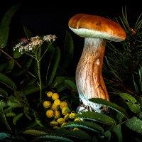 Царь грибов на прогулке :: Сергей В. Комаров