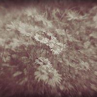 Протягивая руки к звездам, люди часто забывают о цветах под ногами. :: Ирина С