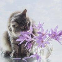Все женщины любят цветы :: Ирина Приходько