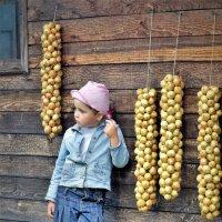 Оля в деревне :: Валерий Талашов