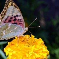 Бабочка :: Татьяна Ларионова