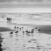 """""""Люди как птицы..."""" :: Andy Zav"""