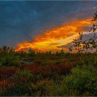 Осень Ямала :: ivan ivanovich