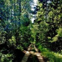 лесная дорога :: Владимир