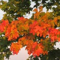 Загадай нам Осень... :: Mariya laimite