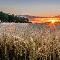 Русское поле :: andrey