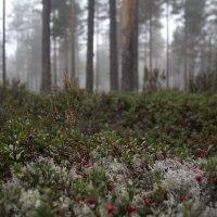 Лесные туманы :: Nika Polskaya