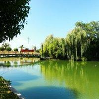 Зелёное озеро :: Александр