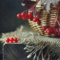калина красная... :: Natali-C C