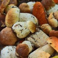 Корзинка полная грибов. :: Елена Kазак