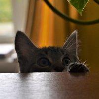 Любопытство. :: Лариса Красноперова