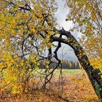 Поникшее дерево :: Валерий Талашов