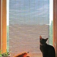 и кошка и  окошко :: Лера