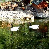 В московском зоопарке :: Надежда