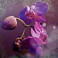 Орхидея :: Nina Yudicheva