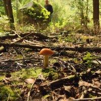 Кто первый гриб в лесу нашел,тому в лукошко гриб пойдет. :: Елена Kазак