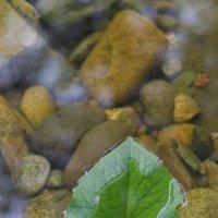 Лист на воде. :: Serge Lazareff
