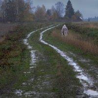 Осенняя дорога :: Валерий Талашов