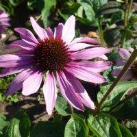 Цветы в сентябре :: Наиля