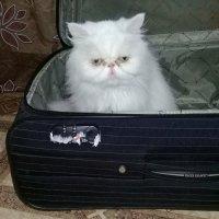 - А я все равно поеду с Вами! :: Чария Зоя