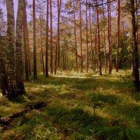 """Из серии """" В лесу"""" :: Мила Бовкун"""