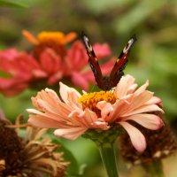 цветочные крылья :: Alisa Koteva