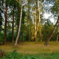 Сентябрьский вечер в лесу :: Olcen Len
