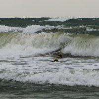 Чёрное море :: Олег Савин