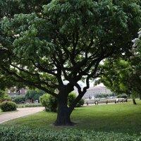 Могучее дерево :: ZNatasha -