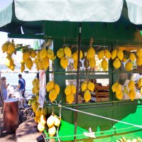 Знаменитые итальянские лимоны :: Лира Цафф