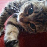 Ещё немного котиков.. :: Елена Елена