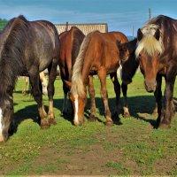 Щиплют кони травку :: Сергей Чиняев