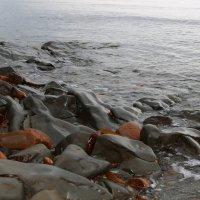 Западное побережье. Охотское море. Ильинское. Сахалин :: Людмила Алейникова