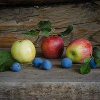 Натюрморт с яблоками и терносливой. :: Олег Бабурин
