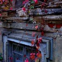 осенние окна :: Наталья Сазонова