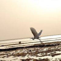 Восход на побережье :: Юлия Якубова