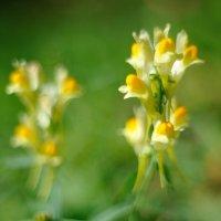 осенние цветы.... :: Андрей Вестмит