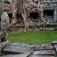 Природное украшение храма :: slavado