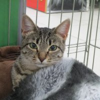 кошка Фенечка. :: Зинаида