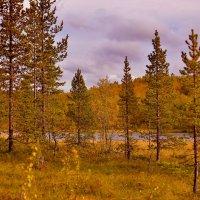 Заполярная осень... :: вадим измайлов